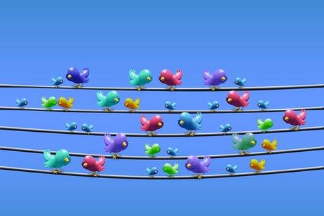 twitter-line-power-line-sit